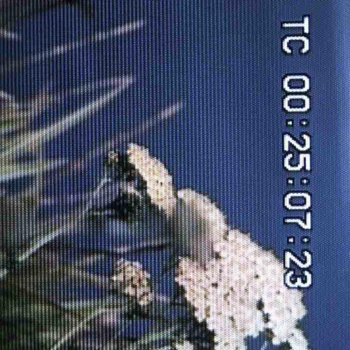 TC00250723 - Colin Snapp